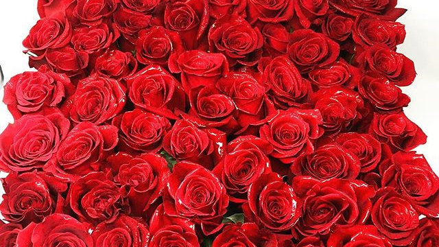 The Fiori Red Roses