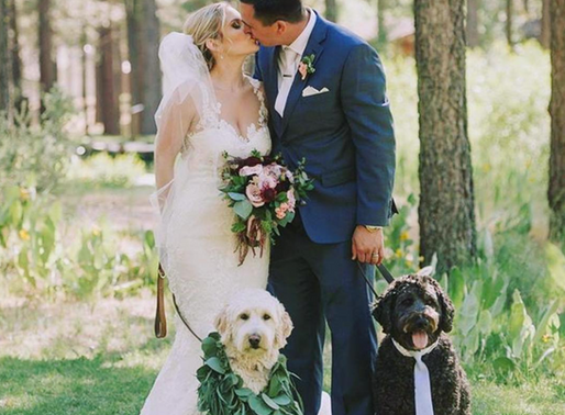 Adorable ways to include your furry friend in your wedding...