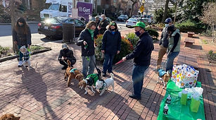 Irish  dog at park.jpg