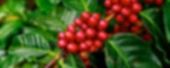 coffee-beans-1650788_960_720.jpg