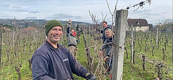 Snoeien van de druivenstruiken bij Le Ca