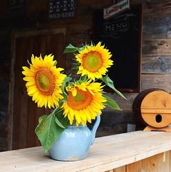 Tournesols ☀️🌻☀️🌻 #soleil #fleurs #bar
