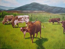 Colorado Longhorns