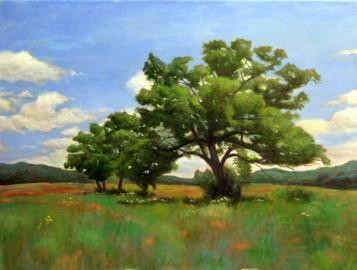 Oak Tree in Summer Field