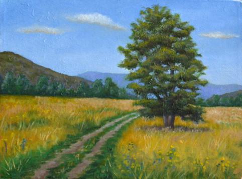Pathin Yellow Field