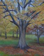 Fall at Cantigny