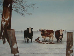 Three Cows in Snow
