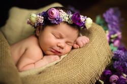 AdobeStock_103717499 - Baby Spring Purpl
