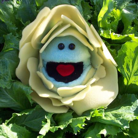 CC Cabbage