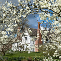 Damson-orchard-in-blossom-large_6.jpg