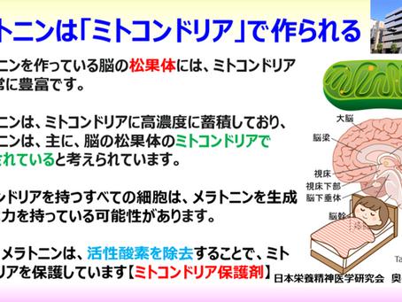 メラトニンは「ミトコンドリア」で作られる:脳の松果体にはミトコンドリアが非常に多い