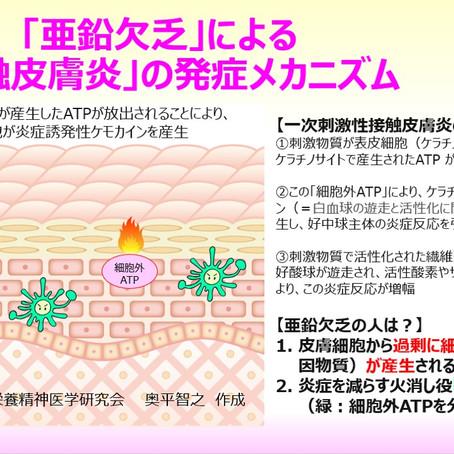 「亜鉛欠乏」による「接触皮膚炎」の発症メカニズム:亜鉛欠乏による免疫異常と炎症:テープかぶれ・低亜鉛血症