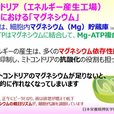 ミトコンドリア(エネルギー産生工場)に大切な「マグネシウム」:細胞の元気(ATP)の源