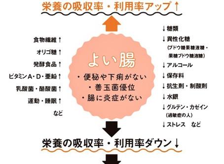 栄養医学的治療の土台~胃腸を整える方法~