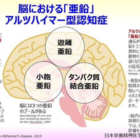 脳における「亜鉛」:アルツハイマー型認知症:海馬、神経栄養因子BDNF、NMDA型グルタミン酸受容体、亜鉛トランスポーター、メタロチオネイン