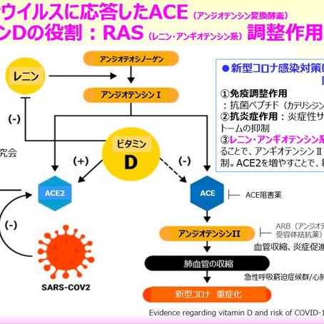 新型コロナウイルスに応答したACE(アンジオテンシン変換酵素)に関するビタミンDの役割:RAS(レニン・アンギオテンシン系)調整作用