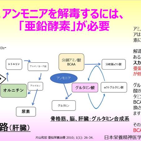 アンモニアを解毒するには、「亜鉛酵素」が必要〈尿素回路〉、アンモニアによる分鎖アミノ酸(BCAA)の消費