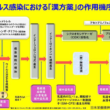 ウイルス感染における「漢方薬」の作用機序
