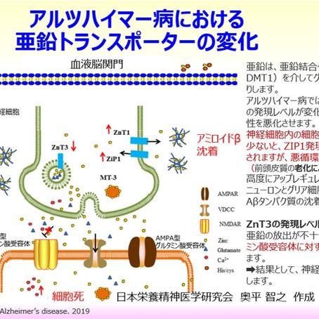 アルツハイマー病における亜鉛トランスポーターの変化:海馬、神経栄養因子BDNF、NMDA型グルタミン酸受容体、メタロチオネイン