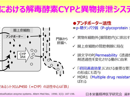 腸における解毒酵素CYPと異物排泄システム~腸上皮細胞内のデトックスの仕組み~