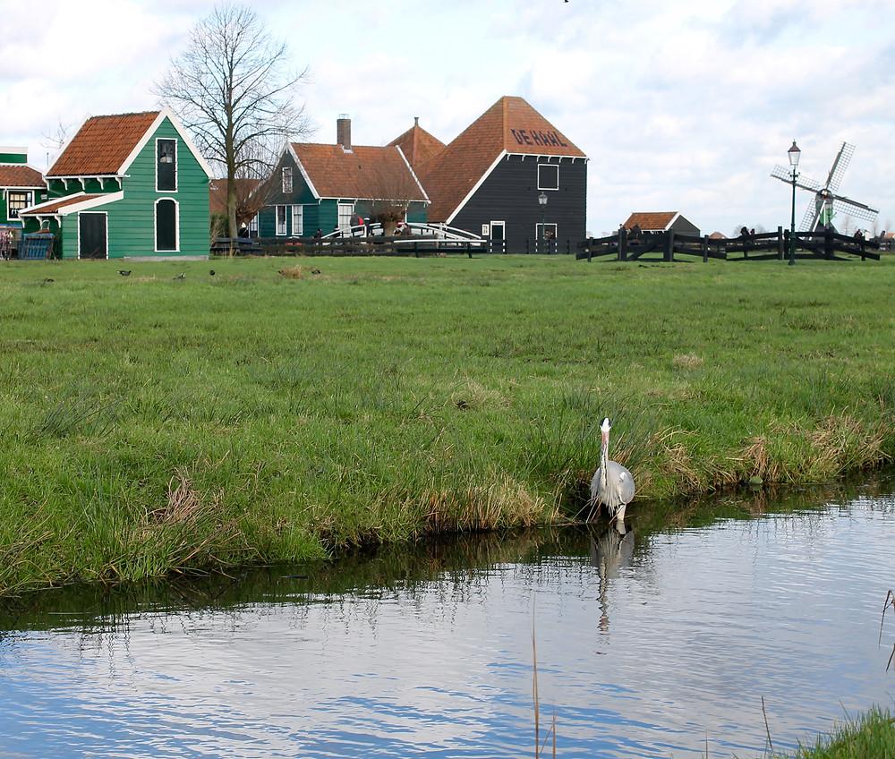 Zaanse Schans Netherlands Travel Holland