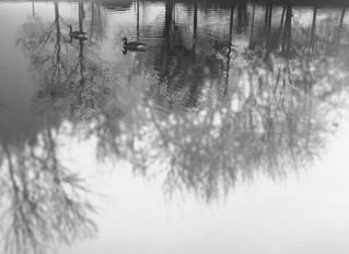 Two Birds Pond