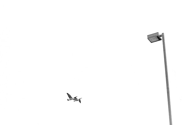 Two Birds Flying