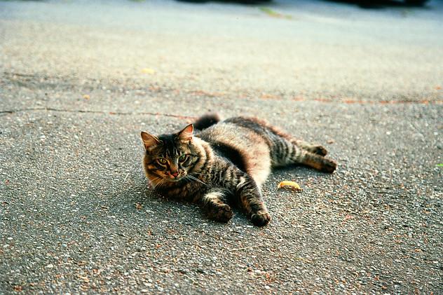 Cat in the Street