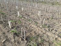 Labour des sols Champagne Naveau