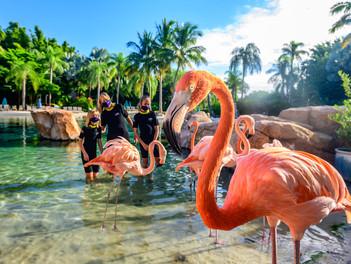 21 nuevas razones para visitar Orlando este 2021