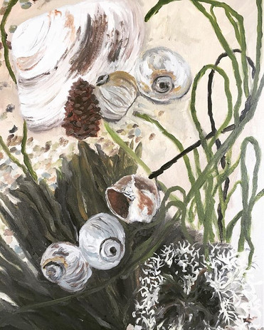 Still life with seaweed and shells. My O