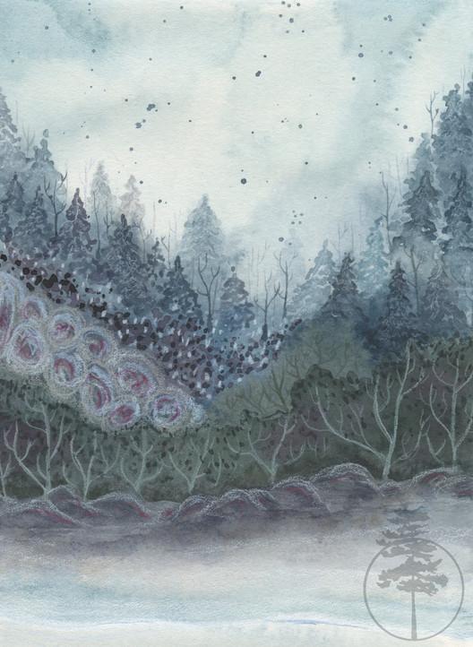 Winter's Scene
