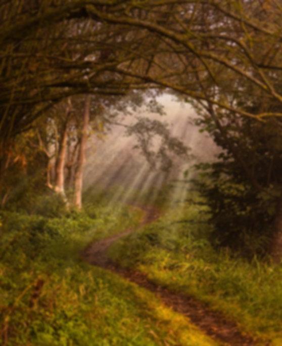 nature-3725726_640.jpg