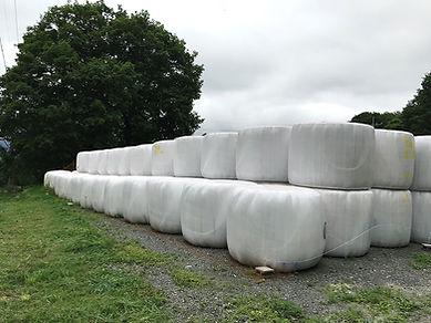 ラップされた牧草は、乳酸発酵し保存粗飼料に.JPG