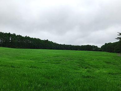 広々とした採草地.JPG