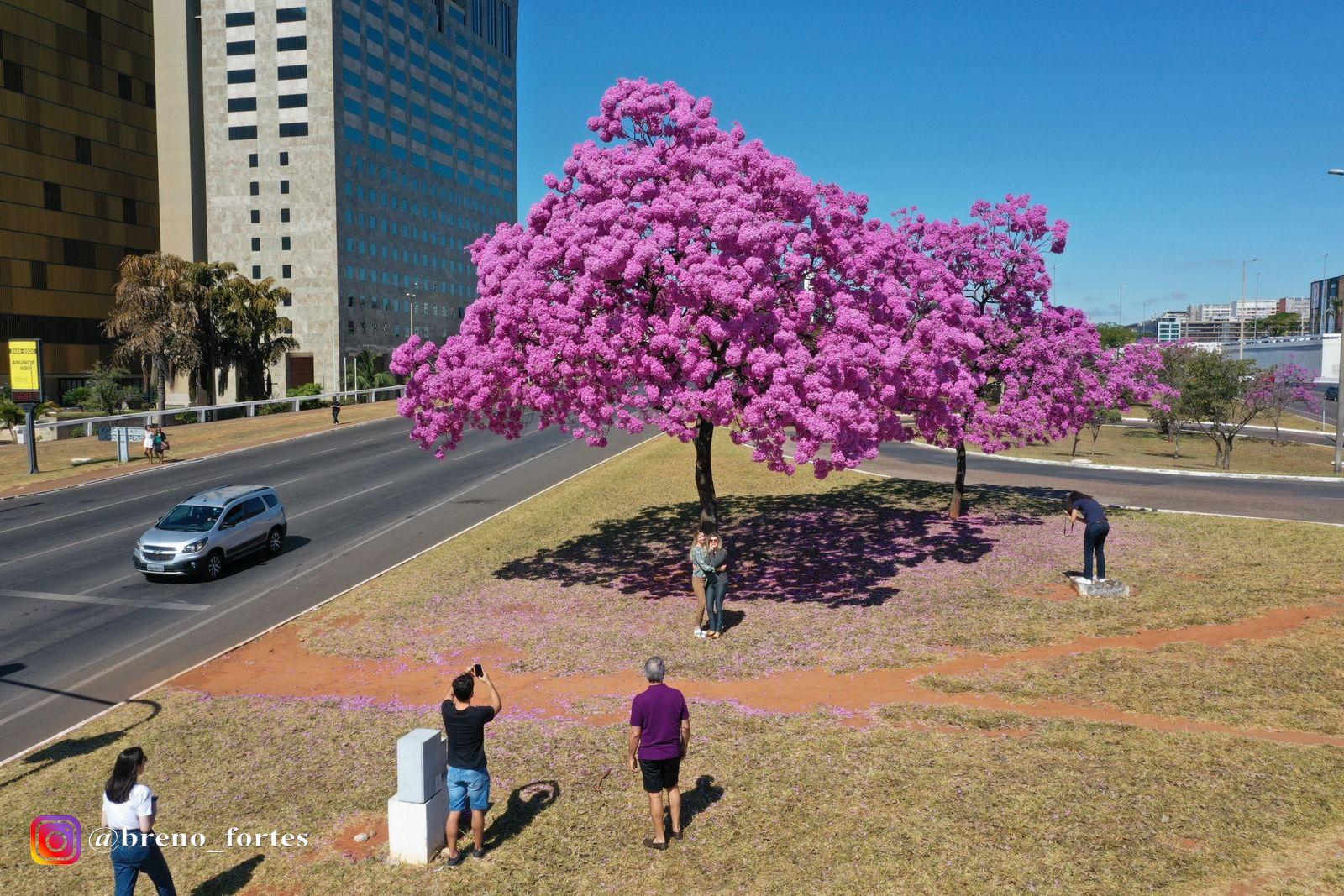 Brasília florida
