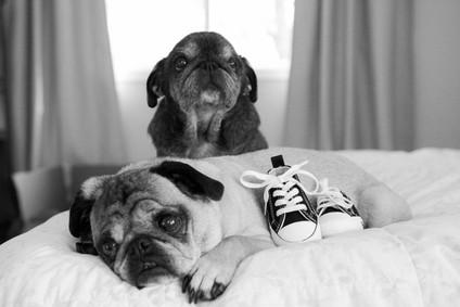 Marx- Dogs Cuddling BW-4.jpg