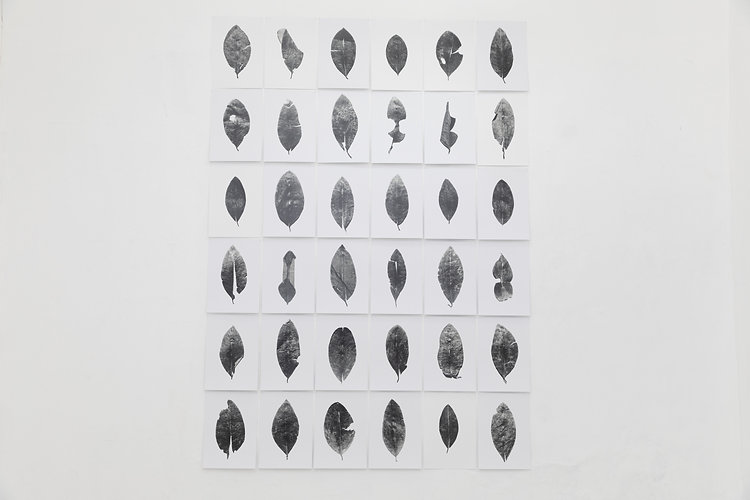 Vista de exhibición. Oráculo, Musuk Nolte, VIGIL GONZALES (2020).