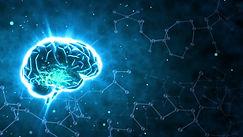 Brain 1.jpg