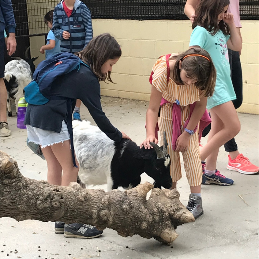 Students touch goats