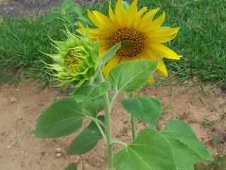 Plante sua flor e crie felicidade
