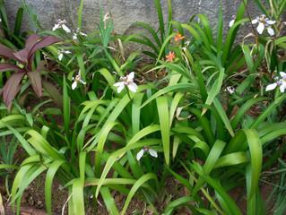 A primavera desperta alegrando nossa vida