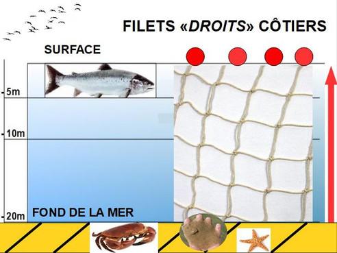 POURQUOI LES FILETS DROITS CÔTIERS INTERCEPTENT LES SAUMONS