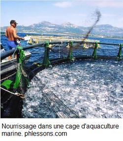 aquaculture (nourrissage)