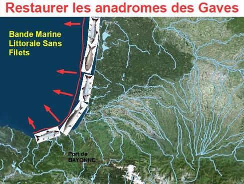 RESTAURER LES ANADROMES DES GAVES (Pyrénées-Atlantiques)