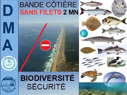 PROJET DE BANDE MARINE SAN FILETS
