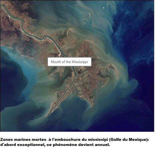 Zone morte (Estuaire du Mississipi)