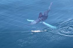 Marlin rayé au large de CAPBRETON