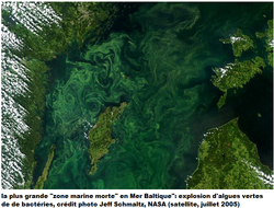 zones mortes, Mer Baltique