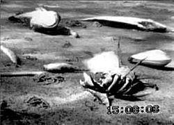 Fonds marins morts (Mer baltique)